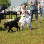 výstava psíkov 124