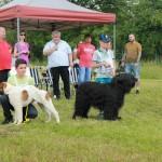 výstava psíkov 296